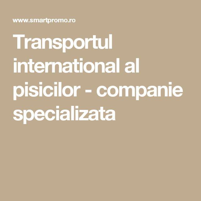 Transportul international al pisicilor - companie specializata