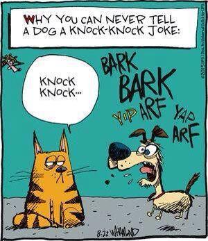 * dog knock joke