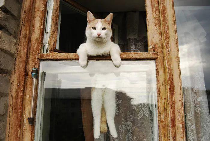 Смешные картинки о окнах, картинки надписями