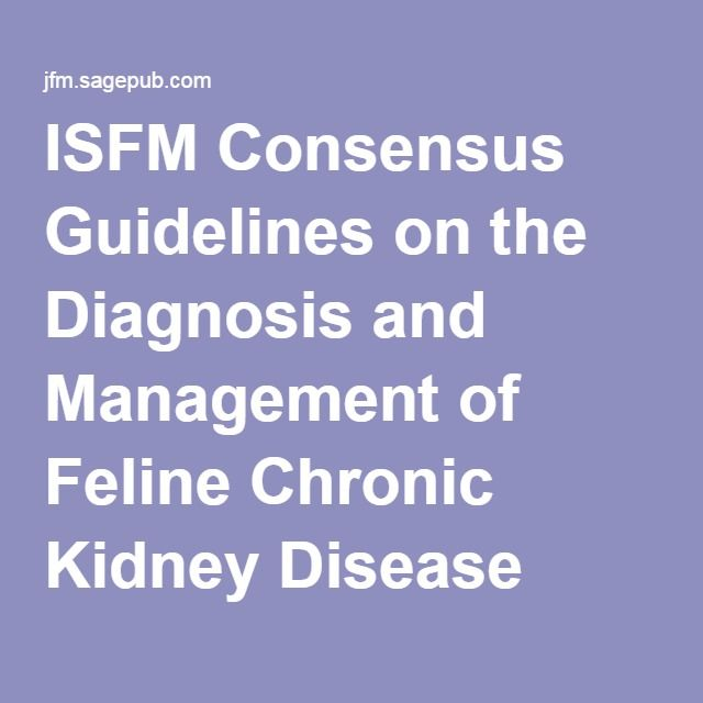 ISFM Consensus Guidelines on the Diagnosis and Management of Feline Chronic Kidney Disease
