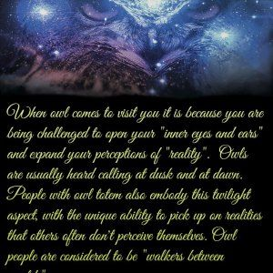Owl Totem Meaning and Inspiration