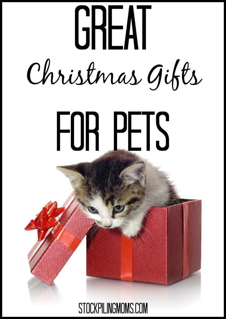 Great Christmas Gifts For Pets.  Don't forget your pets during the holidays. A must read if you are a pet owner.