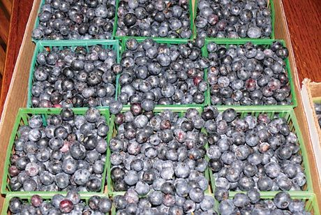 Blueberry cash crop | Backwoods Home Magazine
