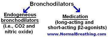 Bronchodilators chart: natural bronchodilators include CO2 (that you get with normal breathing at rest) and NO or nitric oxide that is delivered to the airways and lungs, but only if you breathe through the nose.