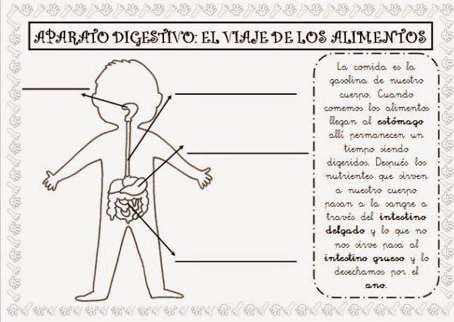 manualidades para infantil del aparato digestivo - Buscar con Google