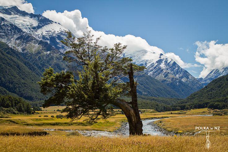 Matukituki Valley, Mt Aspiring National Park, Nowa Zelandia, Southern Alps