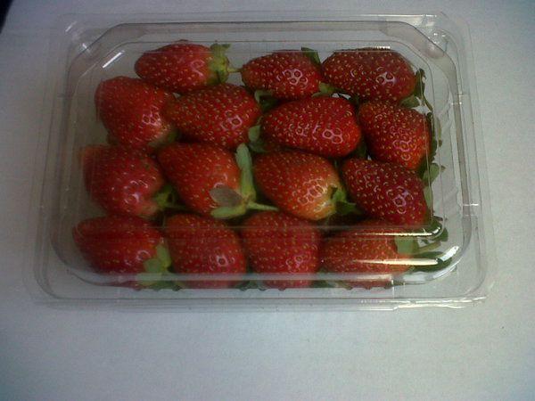 Organic Strawberry Fresh Langsung Petik Kebun