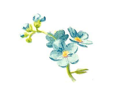 Antique Images: Free Flower Graphic: 2 Vintage Blue Flower Illustrations