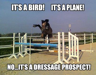 Well, he's definitely not a hunter prospect...check out saddlersrow.com for dressage or hunter/jumper equipment!