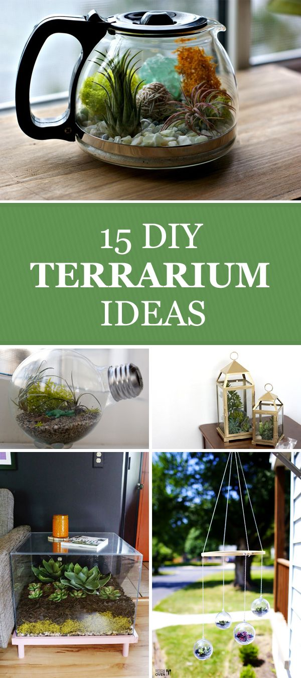 15 DIY Terrarium Ideas to Add Some Green to Your Decor