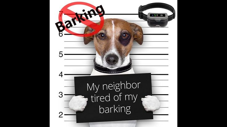 Preview, Testing of Anti Barking Control Device/No Bark Collar/Dog Bark ...