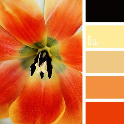 A delightful palette of warm tones. Warming and passionate. The energetic and catchy. Shades of yellow, orange and scarlet, combined with unusually bright black make up the composition. These paints are ideal for interior of kitchen or living room. They awaken the appetite and promote digestion. It is also the perfect solution for the decoration of the nursery.