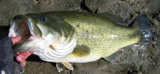 437 best images about the 50 states on pinterest alabama for Alabama freshwater fish