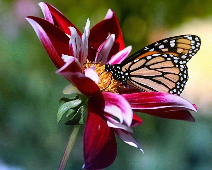 Magnifique cette photo avec ce papillon
