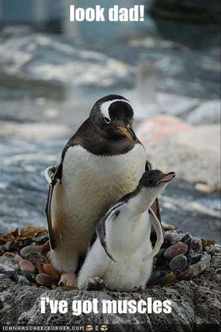 best adorable family images on pinterest adorable animals