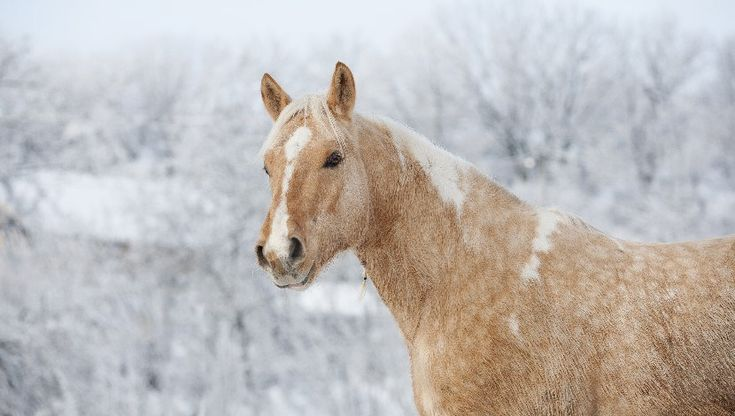 Horse Care with Aroma Oils