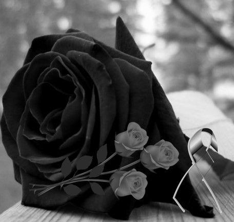 Imagenes De Rosas Negras Para Whatsapp Fondos Estados Para