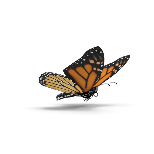 Monarch Butterfly Png Images Psds For Download Pixelsquid S10573206d Monarch Butterfly Monarch Butterfly