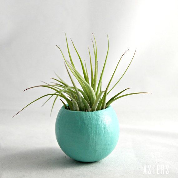 SeaandAsters on Etsy, mini air plant containers.