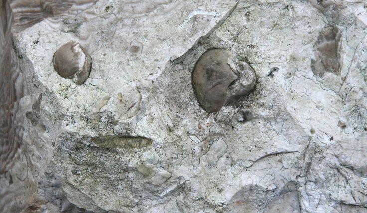 Skamieniałości w krzemieniach | Krzemienie