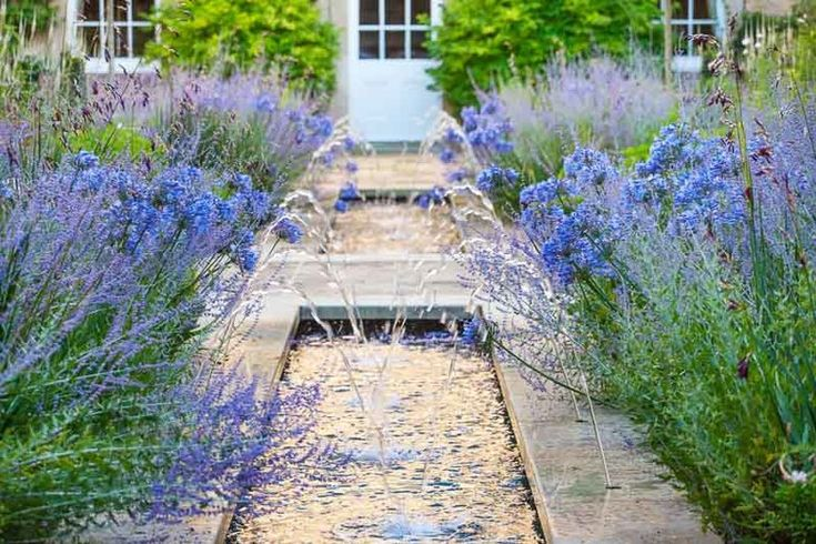 Garden Ideas, Landscaping ideas, Agapanthus africanus, Lily of the Nile, Perovskia atriplicifolia, Russian Sage, Angel Fishing Rod, Dierama pulcherrimum, Blue Flowers