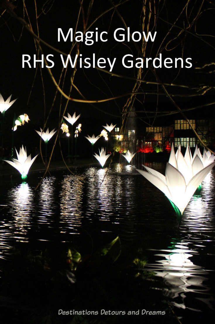 Magical Glow At Garden Wisley In 2020 Gorgeous Gardens Starting A Garden Amazing Destinations