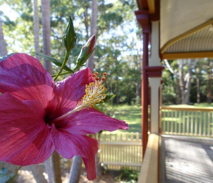 #garden #flower #flora #noperson #nature #summer #leaf #tropical #outdoors #color #tree #park #beautiful #bright #exotic #botanical #growth #wood #blooming #fairweather #asklisa #fz300 #nswcentralcoast #australia #lumix #panasonic #portmacquarie #rotohouse #nswparks