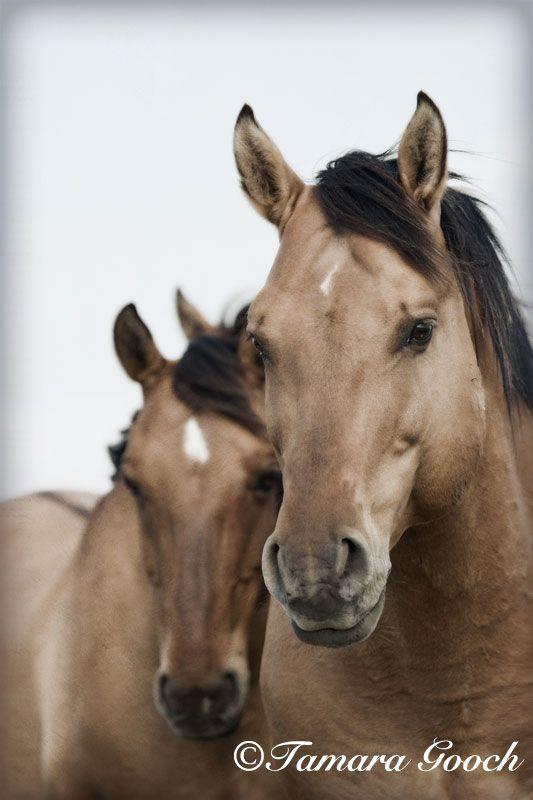 Wild-Horse-Stallion-Photo / Spanish Mustang photo / Tamara Gooch Photography