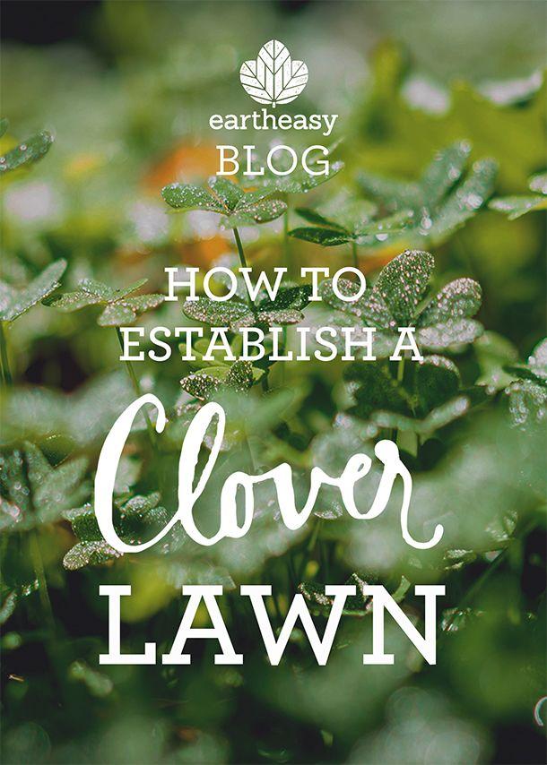 How to Establish a Clover Lawn