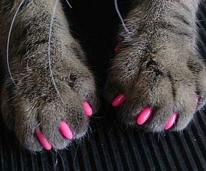 Soft Cat Claws       Protect your home furniture against your cat's destructive nature without the need to inhumanely de-claw her with these soft cat claw covers. These non-surgical caps fit over your cat's sharp nails – preventing her from attacking any guests or tearing up the couch.