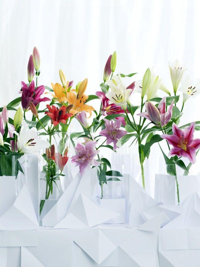 33 besten lilie bilder auf pinterest lilien pflanzen und blumen pflanzen. Black Bedroom Furniture Sets. Home Design Ideas