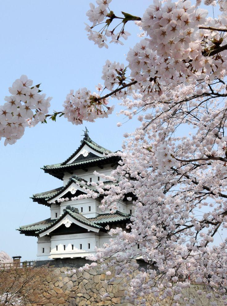 Travel Series Cherry Blossoms In Japan Pendulum Magazine In 2021 Cherry Blossom Japan Cherry Blossom Wallpaper Cherry Blossom Festival