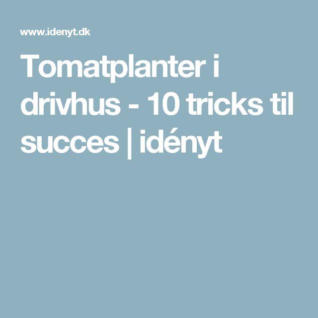 Tomatplanter i drivhus - 10 tricks til succes | idényt