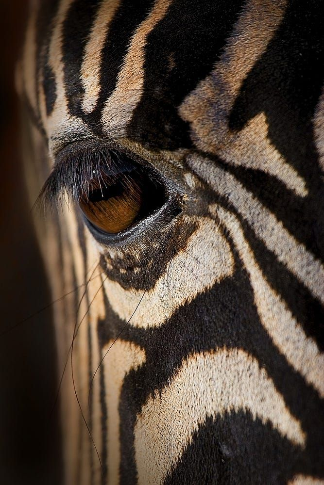 1000+ ideas about Giraffe Photos on Pinterest Crochet ...