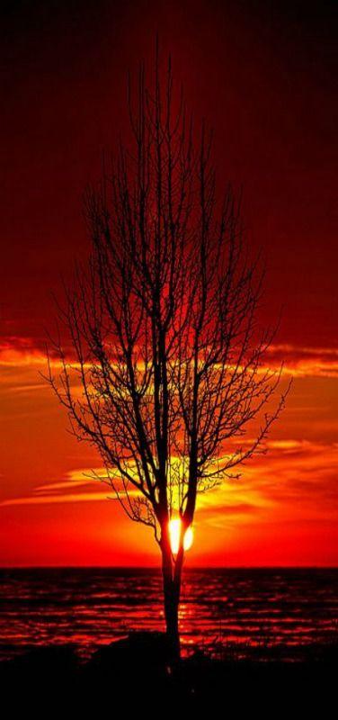 Tree Sunrisen by Phil Koch