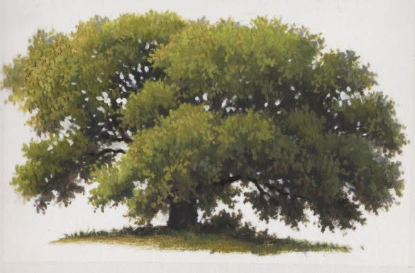 14 best images about proyecto sabana on pinterest for How to paint a tree