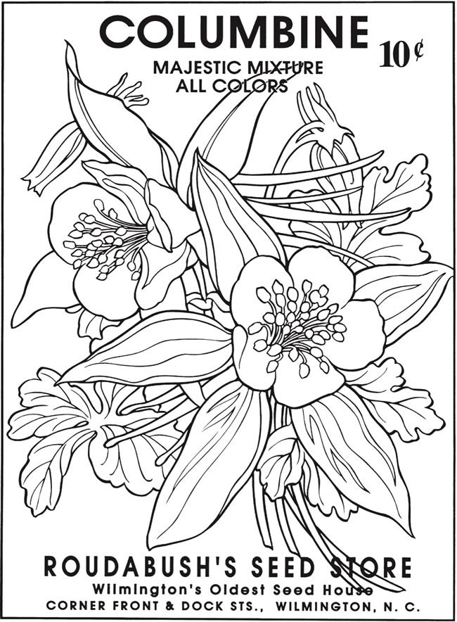 Welcome To Dover Publications Coloring Pages Vintage Drawing Flower Seeds Packets