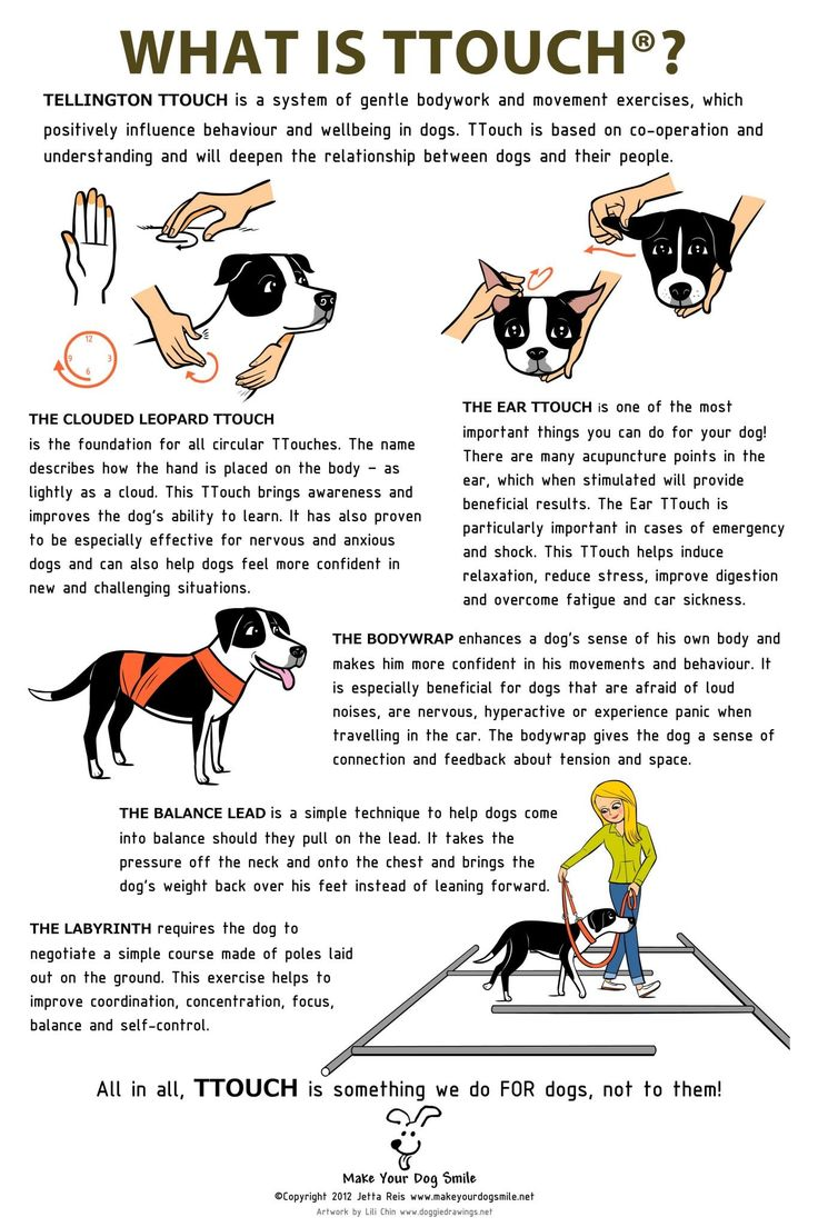 TTouch Therapy for stressed dogs