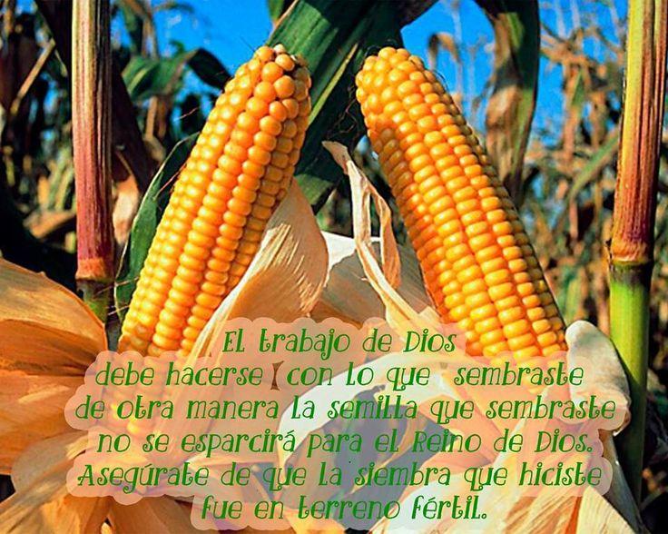No siembro mi campo de maíz y recojo en el campo de maíz de mi vecino. Tiene sentido cosechar donde hemos sembrado. ¿Así que , que nos dice esto acerca de la siembra y la cosecha financiera que escuchamos constantemente? El trabajo de Dios debe hacerse con lo que sembraste, de otra manera la semilla que sembraste no se esparcirá para el Reino de Dios.