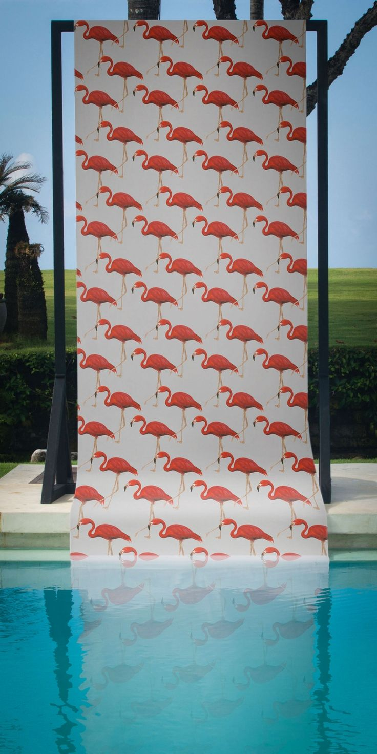 Flamingo Conga by Sophie — Shop | FEATHR