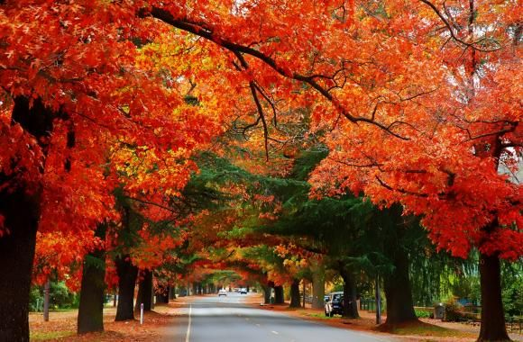 Bright Autumn, Bright, Victoria, Australia