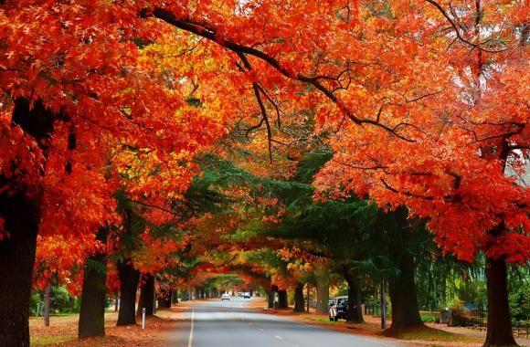 Bright Autumn, Bright, Victoria, Australia