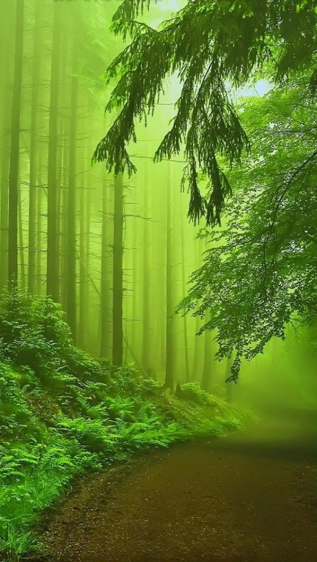 Forest Fog By: Carlos