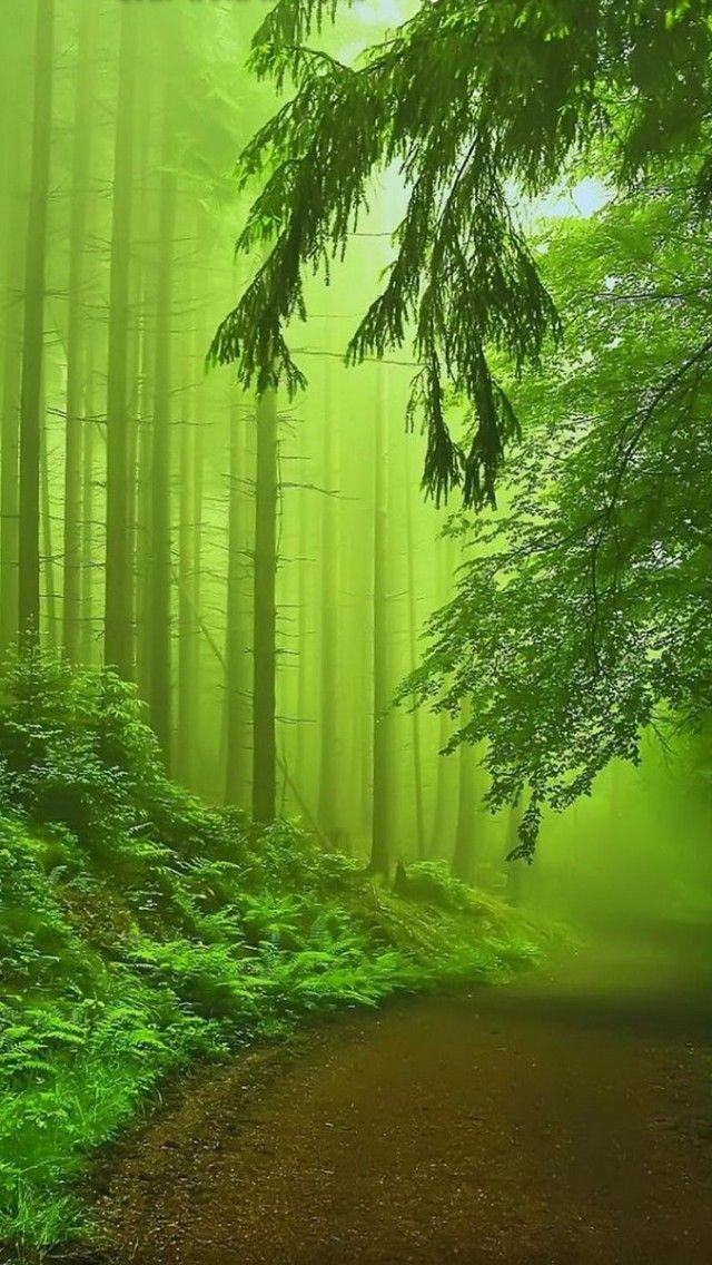 Forest Fog-BEAUTIFUL shot