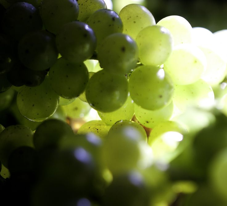 The beauty of the Sauvignon