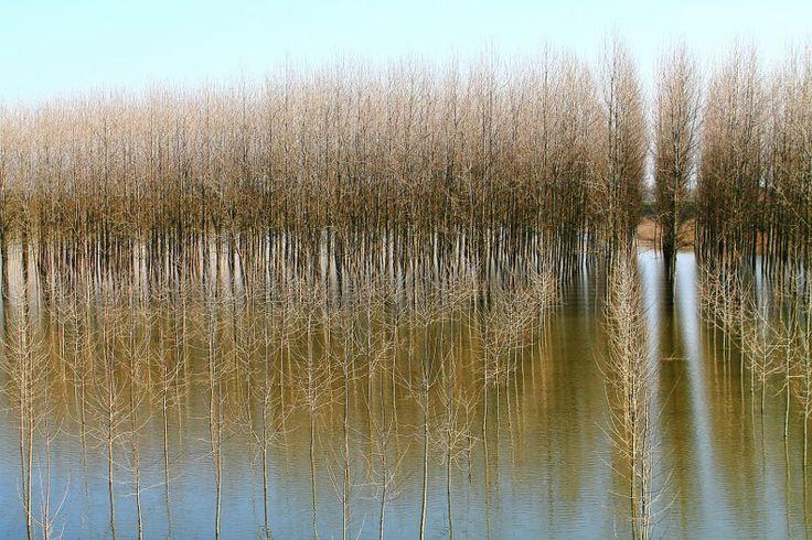 Oglio river at S.Matteo delle Chiaviche