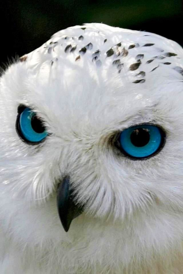 """Owl vision is quite unconventional. Their eyes are extremely large and nearly touch inside the head. Owl eyes are also completely immobile and cannot be considered true """"eyeballs,"""" since they're actually tube-shaped."""