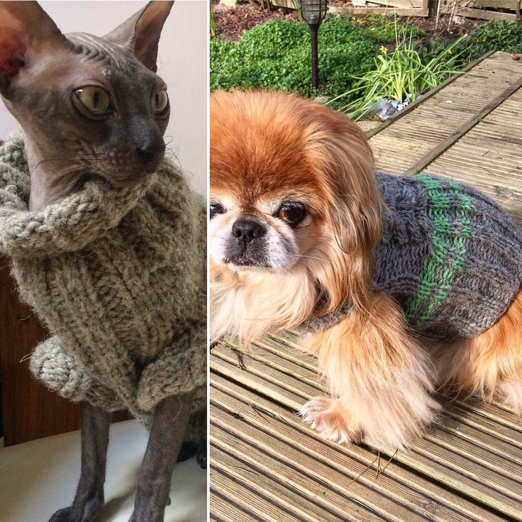 Sale!All cats and dogs outfits at reduced price. Have a look, please!