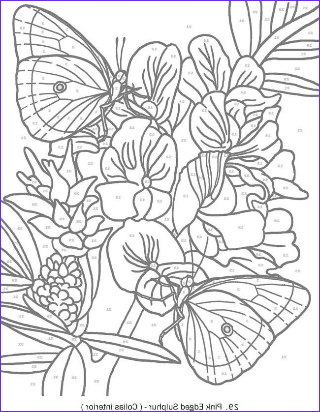 344 Best Dover Samples Butterfly Bird And Flower Coloring Books Coloring Pages Stained Glass Patterns Free