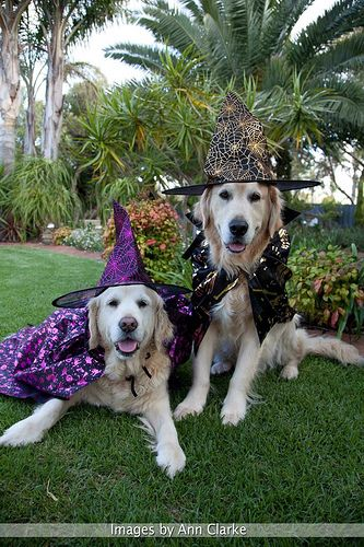 golden retriever costume eBay